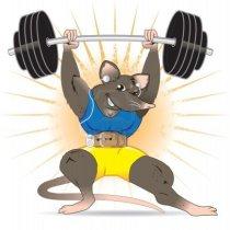 13453583-gym-rat